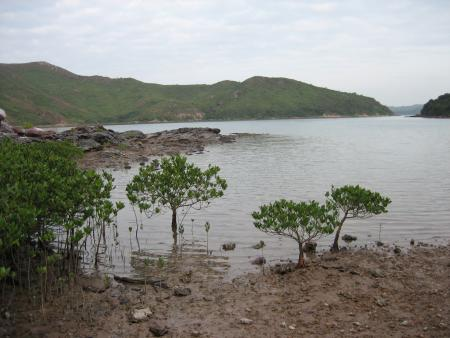 Mangroves at Sam A Chung