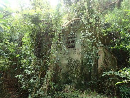 Overgrown structure - a public toilet